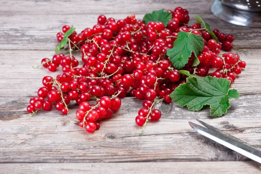Red Currant: the Goldilocks berry