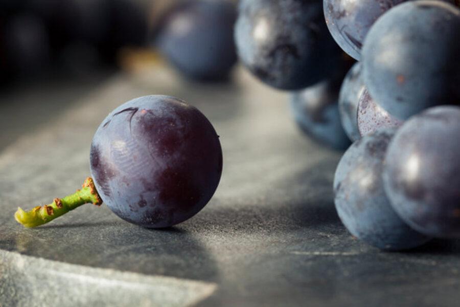 Classic American Concord Grape Fruit Pureés