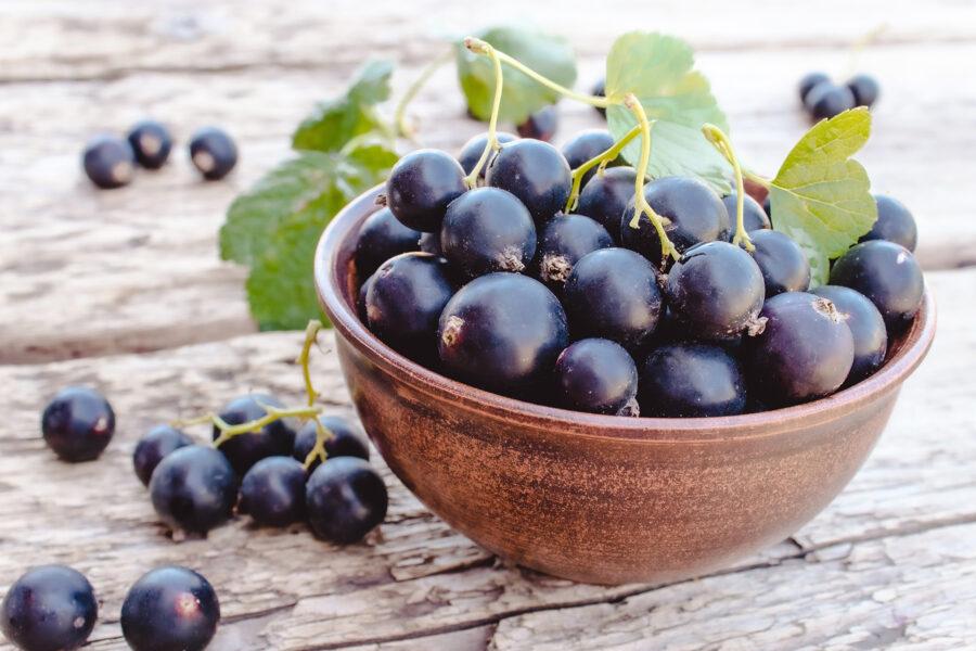 Black Currant: the funky, fruity, feel-good flavor